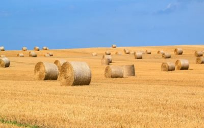 How farmers on the Eyre Peninsula are adapting