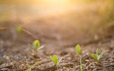 Restoring habitat on marginal farming land